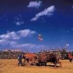 The Cheongdo Bullfighting Festival