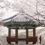 South Korea's Spring Festivals: Things to Look Out For in March & April 2016