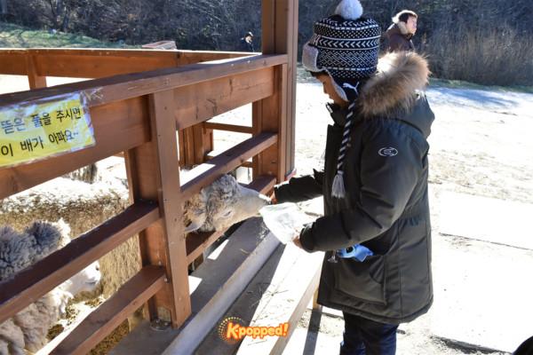 skyranch-sheep-farm-1